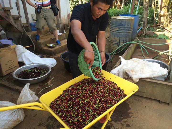 Foto: Eli Zubiria. Recolector de café en Bolaven Plateau