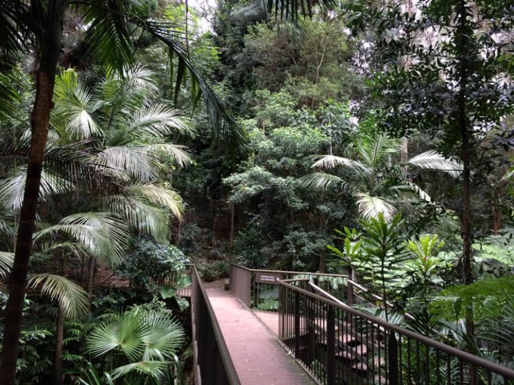 Foto: Eli Zubiria. Botanic Gardens de Canberra, en Australia